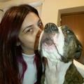 Dogs Lover - Coccole Coccole e ancora Coccole