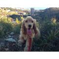 Dog sitter a Genova