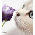 Cat sitter/Per sitter affidabilità anche Agosto